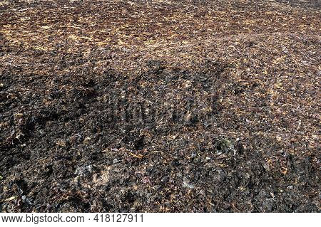 Dried Seaweed On A Coastal Beach In Springtime