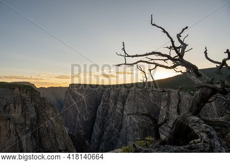 Gnarly Dead Tree On The Edge Of Black Canyon Of The Gunnison At Sunset