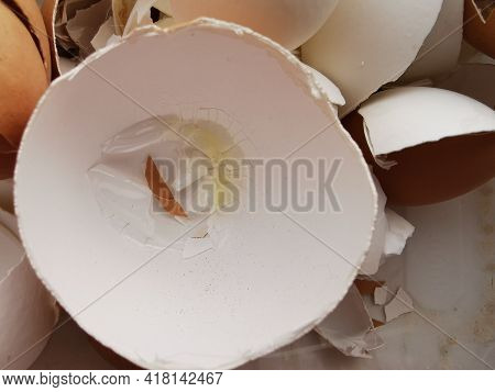 Eggshell With Residues Of Protein Shards Of Different Sizes