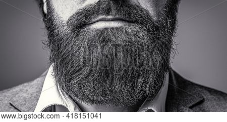 Perfect Beard. Close Up Of Handsome Beard Hipster Elegant Male. Bearded Man Close Up. Beard Is His S