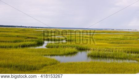 Marsh In Cape Cod, Massachusetts Near Wellfleet