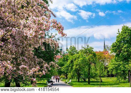 Prague, Czech Republic - May 2019: Vojanovy Sady Gardens In Mala Strana In Spring