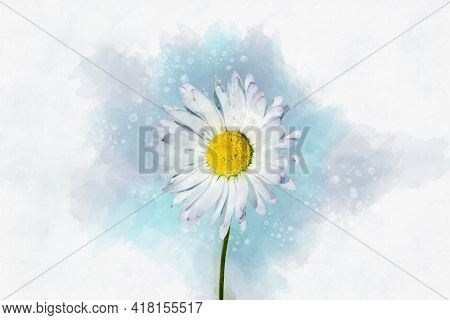 White Daisy Floral Botanical Flower. Watercolor Background Illustration Set. Isolated Daisy Illustra