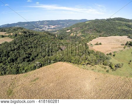 Aerial View Of A Corn Plantation And Forest