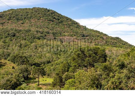 Forest And Mountains With Blue Sky