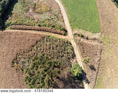 Aerial View Of A Corn Plantation And Forest, Santa Maria Do Herval, Rio Grande Do Sul, Brazil