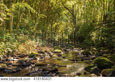 Stream In The Forest With Stone And Plants, Santa Maria Do Herval, Rio Grande Do Sul, Brazil