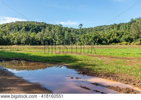 Farm Field With Dirty Road And Forest, Ivoti, Rio Grade Do Sul, Brazil