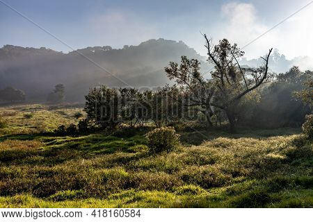 Farm Field With Fog And Forest At Sunrise, Ivoti, Rio Grade Do Sul, Brazil