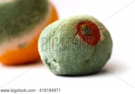 Tangerine With Mold On A White Background. Citrus With Fungus. Spoiled Product.selective Focus. Soft