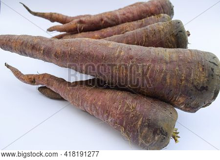 Dark Colored Carrots. Fresh Organic Farm Fresh Plucked Harvested Carrots. Dark Pink Or Red. Brown Bl