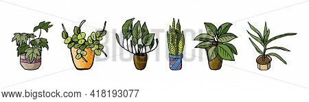 Home Plants. Set With Indoor Plants Ficus, Yuka And Others In Doodle And Cartoon Style. Home Design.