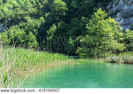 Reeds On The Shore Of A Lake In Front Of A Rock Wall In The Plitvice Lakes National Park.