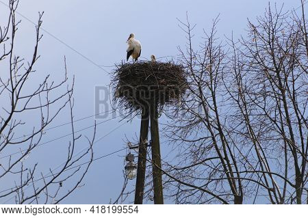 Ciconia. Stork. Wild Bird. Stork Nest On A High Post. A Pair Of Birds In The Nest. Two Storks. Large