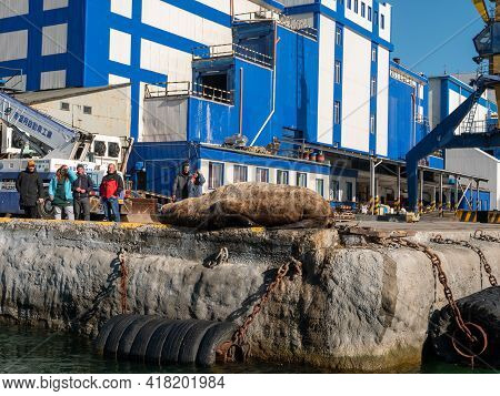 Kamchatka Peninsula, Russia - September 30, 2018: The Seaport In The Avacha Bay Of Petropavlovsk-kam