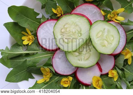 Healthy Organic Vegetarian Salad With Fresh Radish, Cucumber And Dandelion Leaves Decorated With Edi