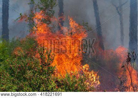 A Prescribed Burn In Rock Springs Run State Reserve In Florida.