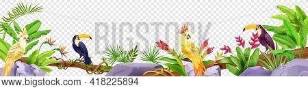 Jungle Bird Border, Exotic Tropical Frame, Toucan, Parrot, Stone, Liana, Banana Leaves, Paradise Flo