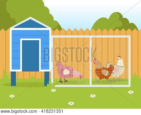 Hens Walking Outside And Pecking Seeds. Domestic Birds Near Henhouse Or Chicken Coop In Summer Flat