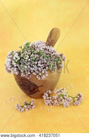 Valerian herb flowers in a mortar with pestle. Used in herbal medicine to treat insomnia, anxiety, headaches, digestive problems, menopause symptoms, muscle pain and fatigue. Valeriana officinalis.