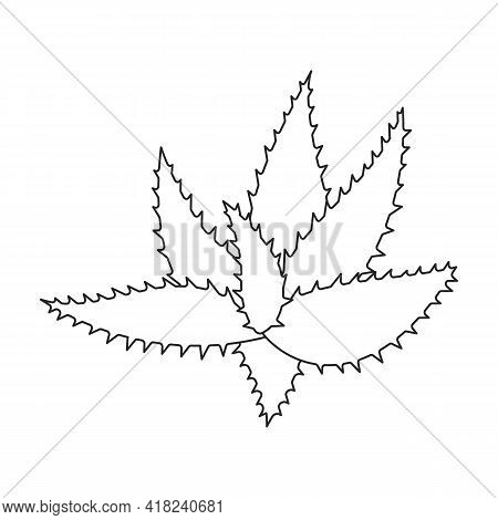 Aloe Vera Vector Outline Icon. Vector Illustration Plant On White Background. Isolated Outline Illus