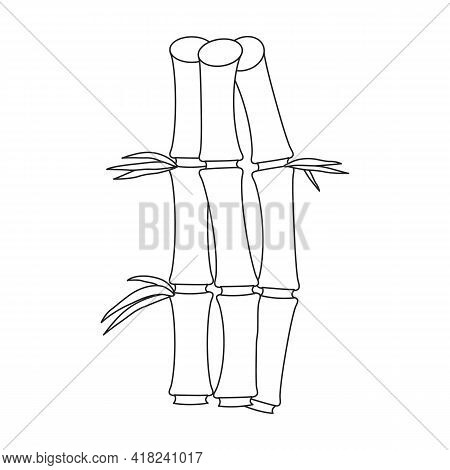 Bamboo Vector Outline Icon. Vector Illustration Tree On White Background. Isolated Outline Illustrat