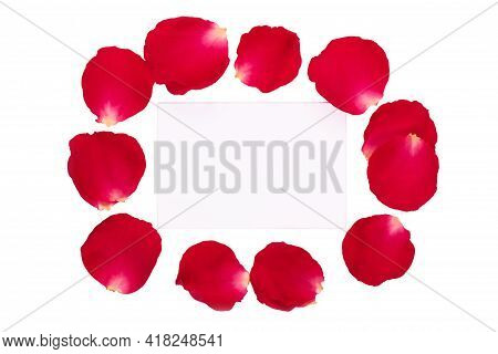 Composition With Live Rose Petals On A White Background. Gift Card On Red Rose Petals