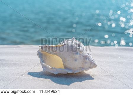 Seashell On A White Sand And Blue Water Background, Space For Text. Summer Beach. Seashell On The Sa