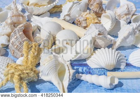 Seashell And Sailor Rope On A Blue Wooden Table As Background. Summer Times. Seashell On The Blue. H