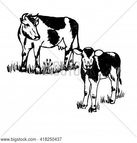 Doodle Pet On Farm Cow And Calf Black Outline