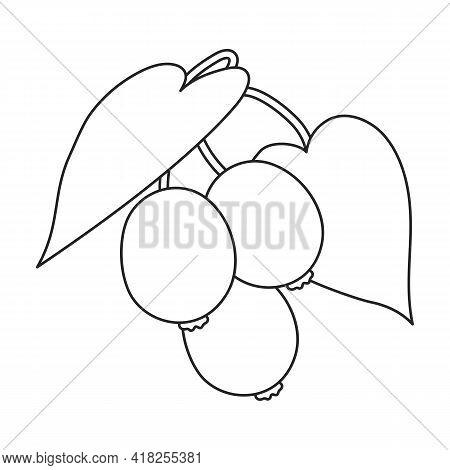 Kiwi Fruit Vector Outline Icon. Vector Illustration Kiwifruit On White Background. Isolated Outline