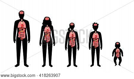 Internal Organs In Baby, Girl, Boy, Adult Man And Woman Silhouette. Stomach, Liver, Intestine, Bladd