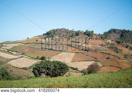 Divided Farm Lands With Fields Of Rice And Chili Growing While On A Hike From Kalaw To Inle Lake, Sh