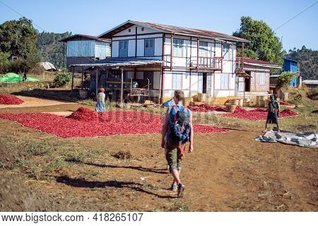 A Backpacker Visits A Local Chili Farm Plantation In Myanmar