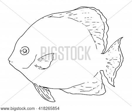 Platax Fish Sketch In Cartoon Style On White Background. Line Art Drawing Style. Vector Isolated Out