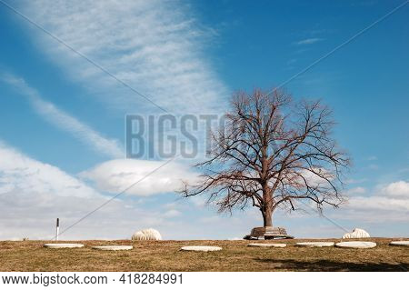 Lonely Leafless Tree In The Park With A Cloudscape Background