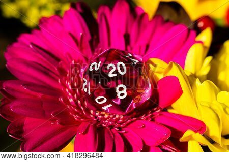 Close-up Image Of A Pink 20-sided Rpg Die On A Pink Gerbera Daisy Next To A Yellow Gerbera