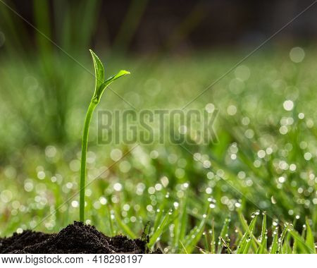 Young Plant-new Life. Young Sprout And Grass Covered With Dew. A Young Plant Against The Background