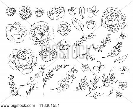 Set Of Elements, Flowers Peonies And Leaves. Vector Illustration