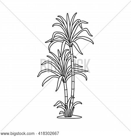 Vector Illustration Of Palm And Cane Logo. Web Element Of Palm And Field Vector Icon For Stock.