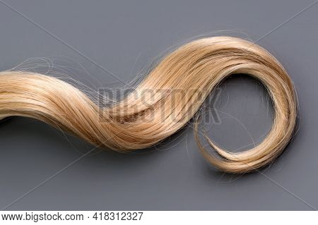 Curly Blonde Hair On Grey Background. Beautiful Healthy Long Blond Hair Lock, Haircut, Hairstyle. Dy