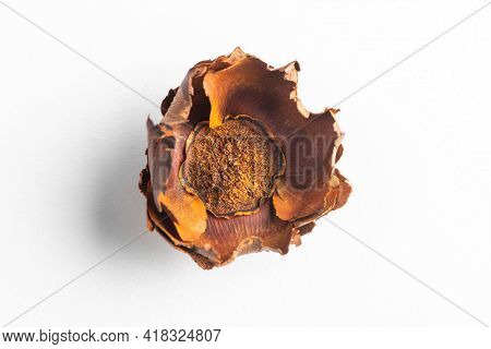 Close-up On A Dried Flower On White Background