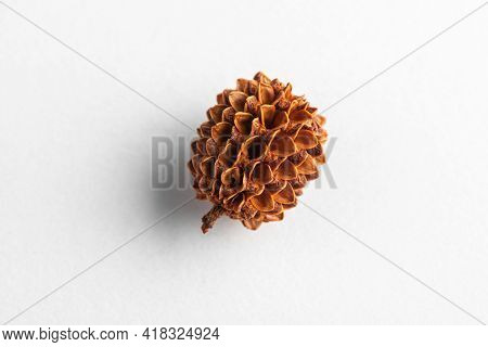 Dried Cone Of A Plant On White Background