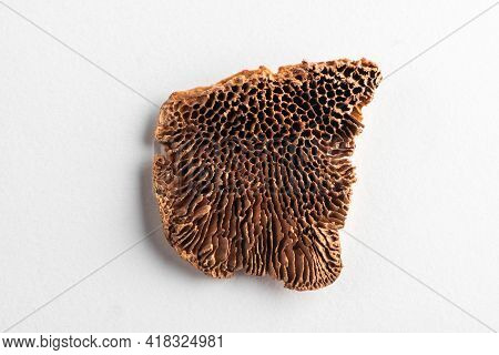 Top View On Dried Gloeophyllaceae On White Background