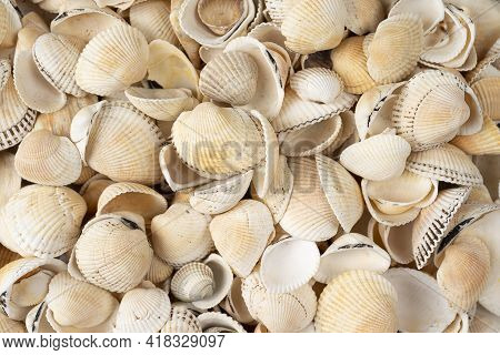 Sea Shell Background, Many Different Shells, White And Beige Sea Shells Folded Together Close-up In