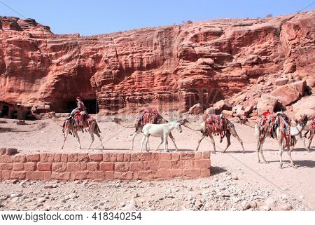 Bedouin in traditional clothing with five camels dromedary in Petra (Red Rose City), Jordan. UNESCO world heritage site