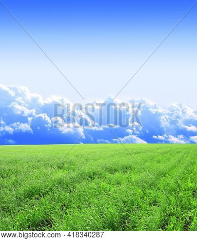 Summer landscape with field of green fresh grass under blue sky. Meadow grass and sunny spring day. Tranquil nature scene