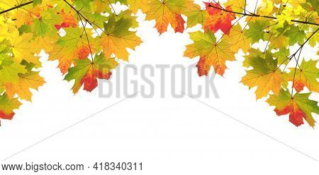 Frame with branch of maple with leaves of green, yellow and red color. Decorative border with autumn maple leaf. Isolated on white background