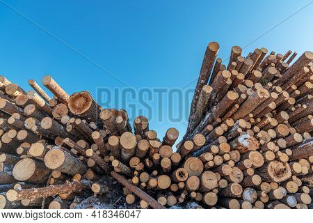 A Pile Of Logs For Sawing Into Boards. The Texture Of Felled Logs. Logging. Logs In The Lumber Wareh