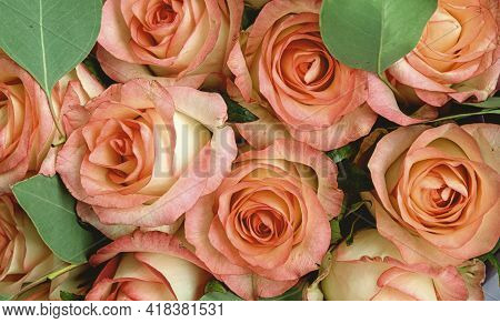 Pink Background. Colorful Orange Background Of A Bouquet Of Roses